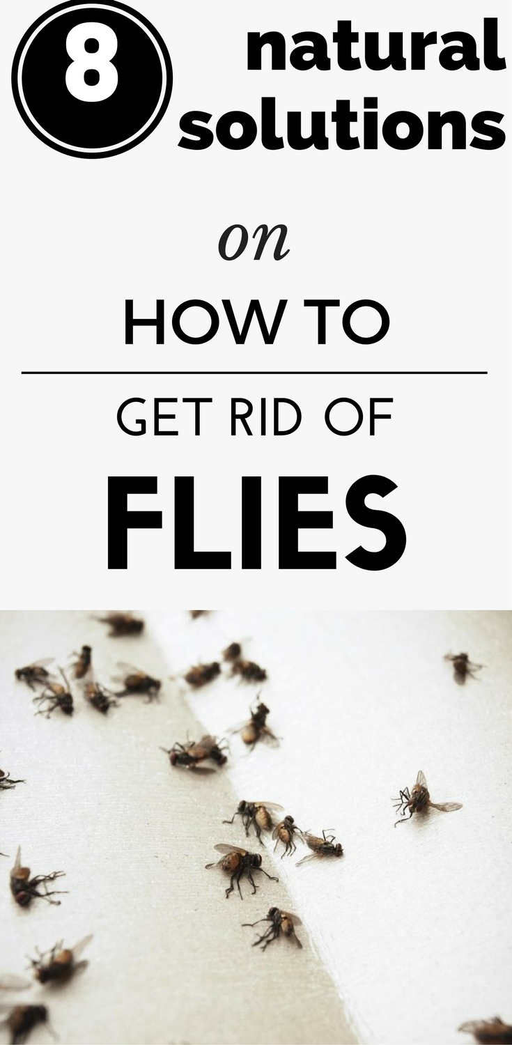 8 Natural Solutions On How To Get Rid Of Flies (1)
