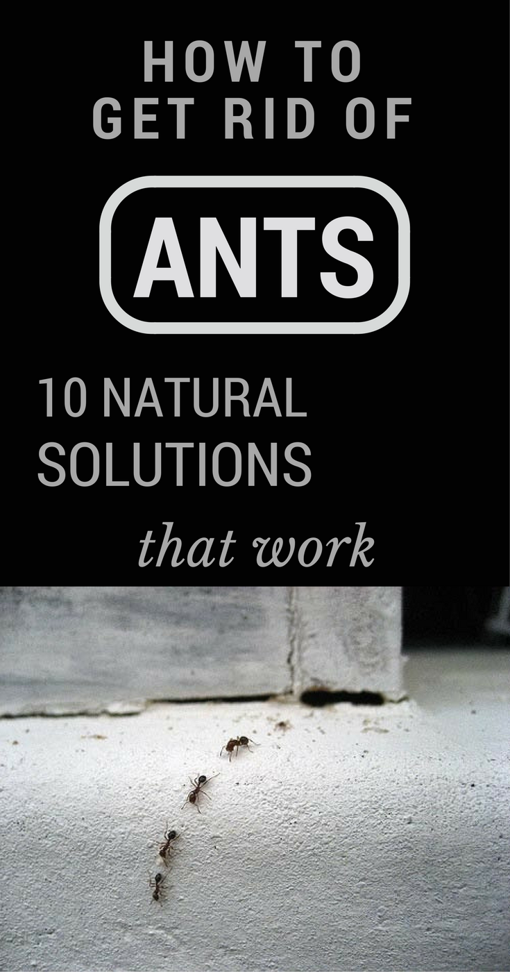 How To Get Rid Of Ants In House - 10 Natural Solutions That Work