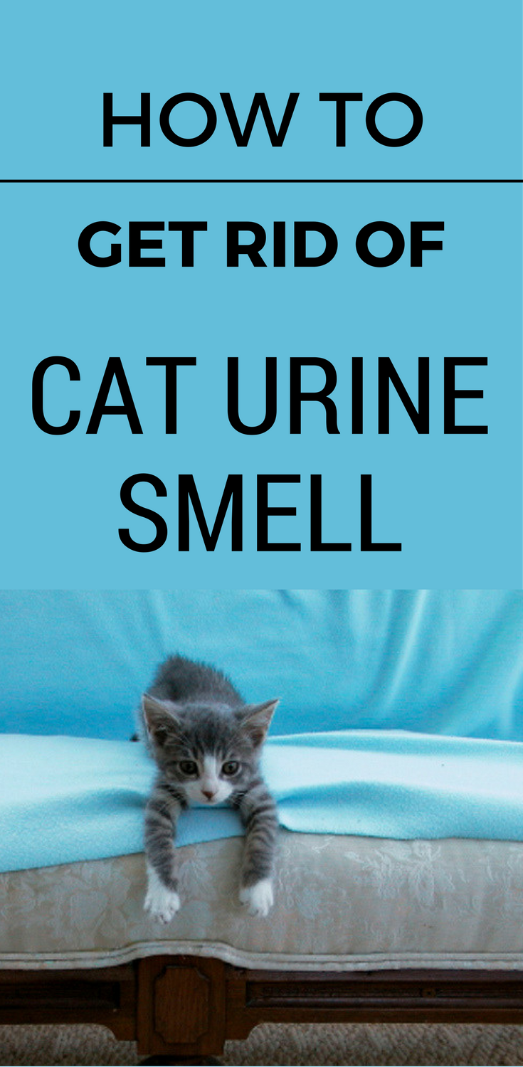 How To Get Rid Of Cat Urine Smell >> How To Get Rid Of Cat Urine Smell - 101CleaningSolutions.com