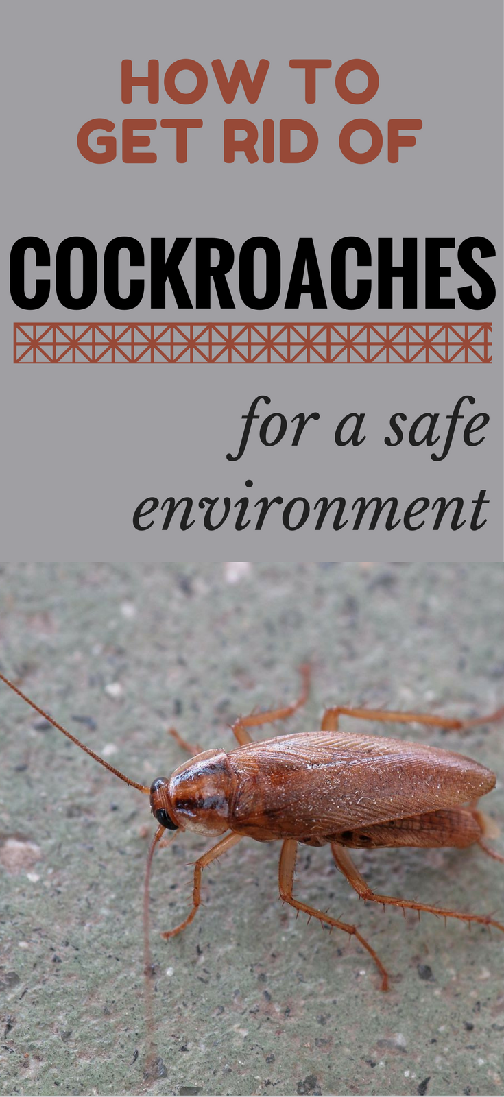 How To Get Rid Of Cockroaches For A Safe Environment