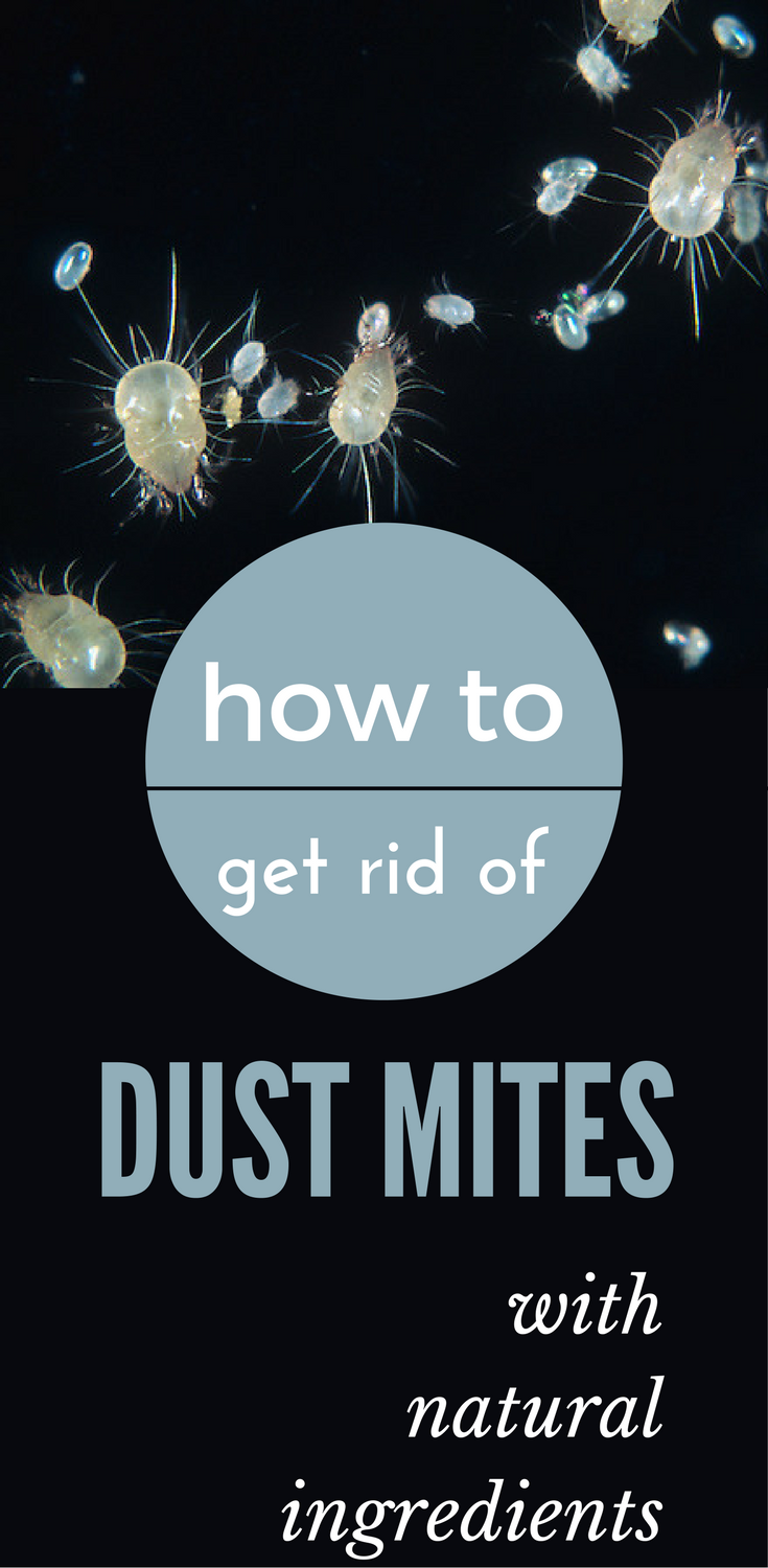 How To Get Rid Of Dust Mites With Natural Ingredients