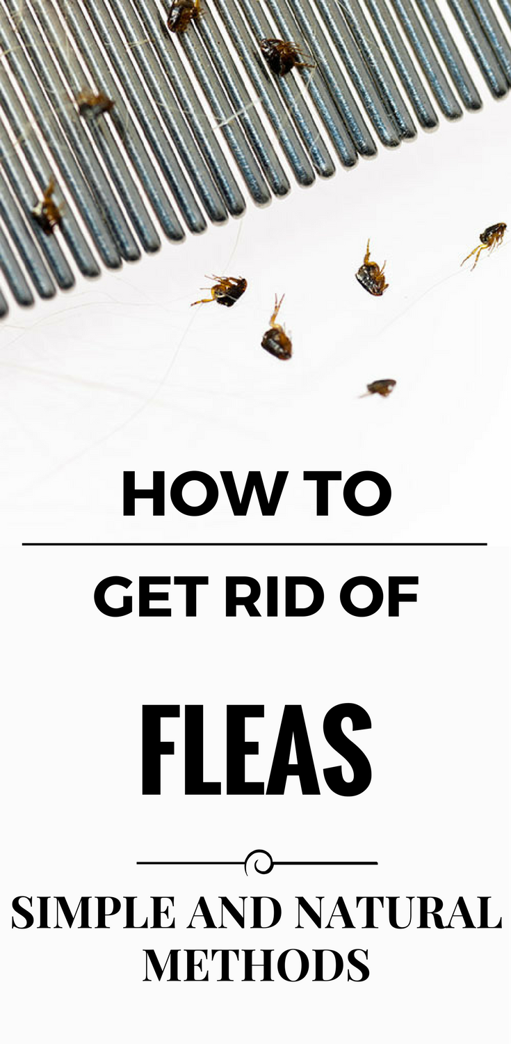 How To Get Rid Of Fleas - Simple And Natural Methods