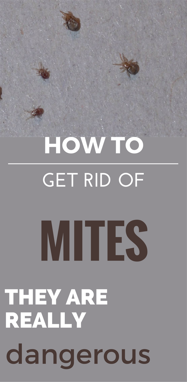 How To Get Rid Of Mites - They Are Really Dangerous