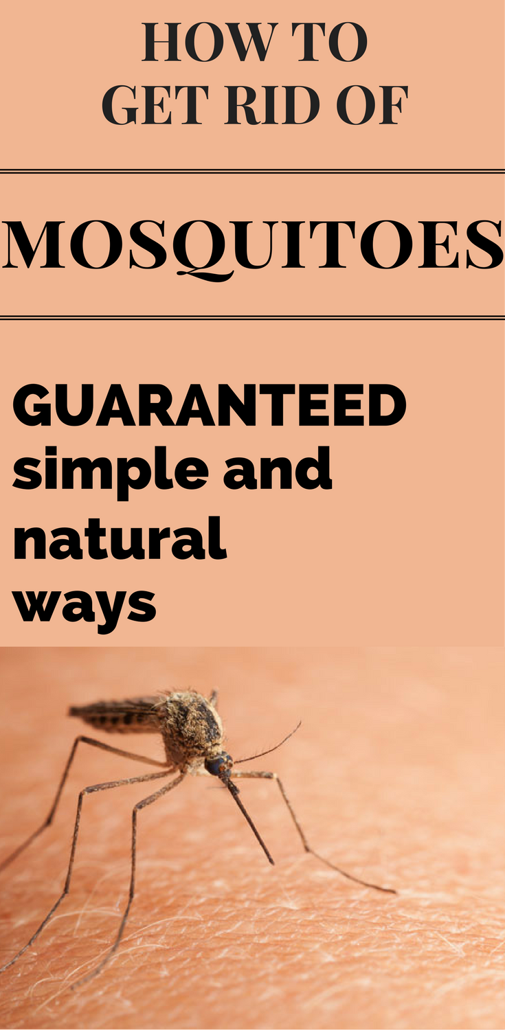 How To Get Rid Of Mosquitoes - Guaranteed Simple And Natural Ways