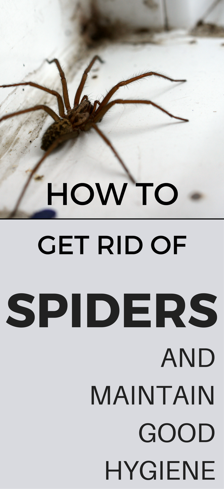 How To Get Rid Of Spiders And Maintain Good Hygiene