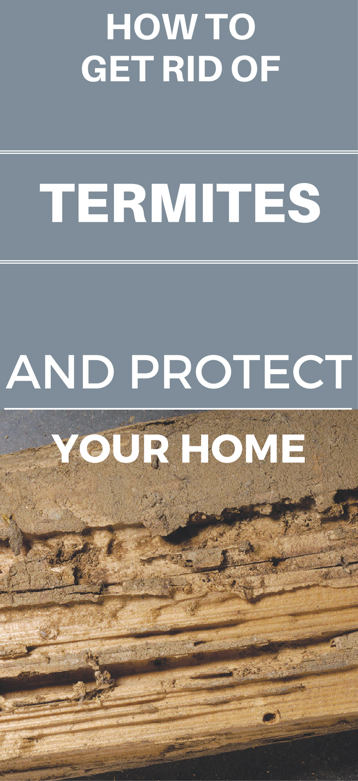 How To Get Rid Of Termites And Protect Your House
