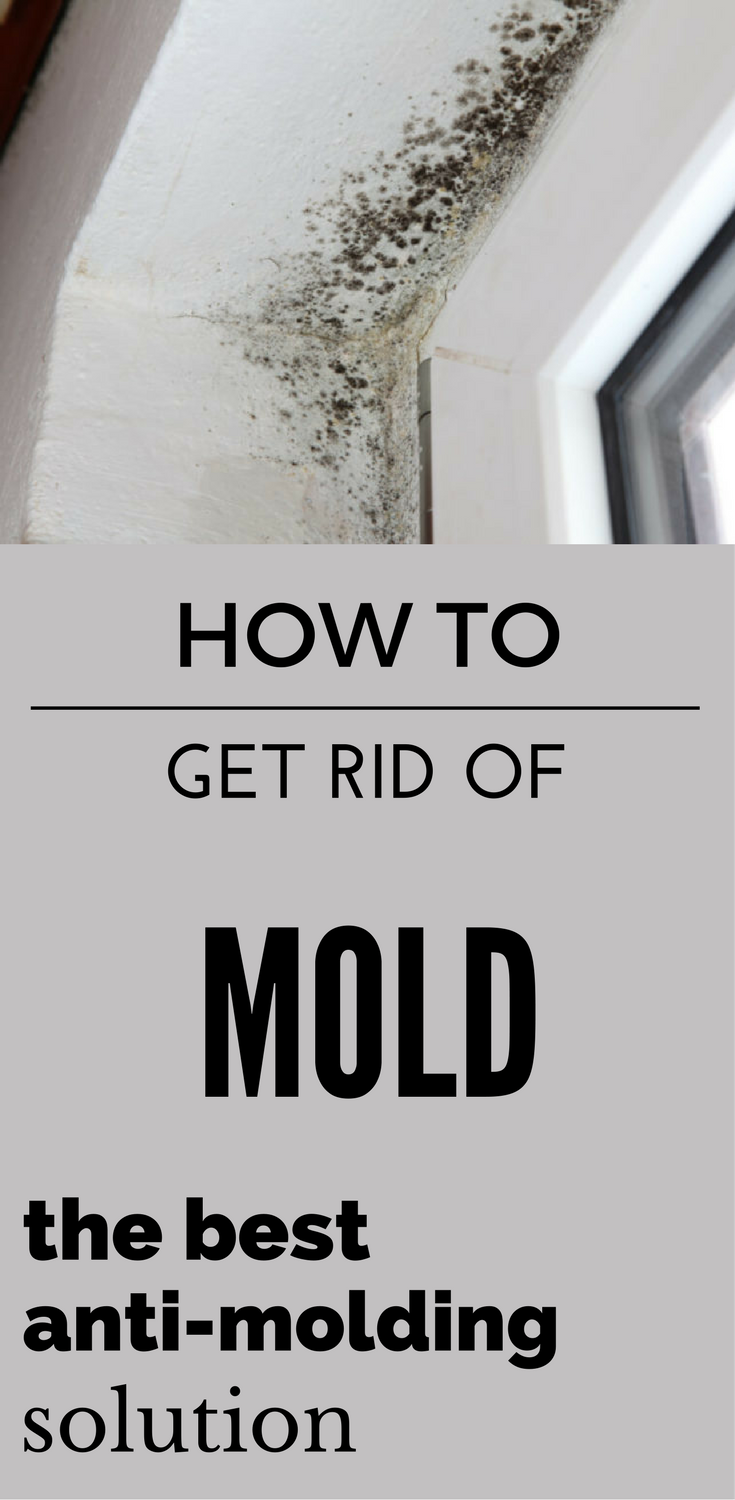How To Get Rid of Mold - The Best Anti-Molding Solution