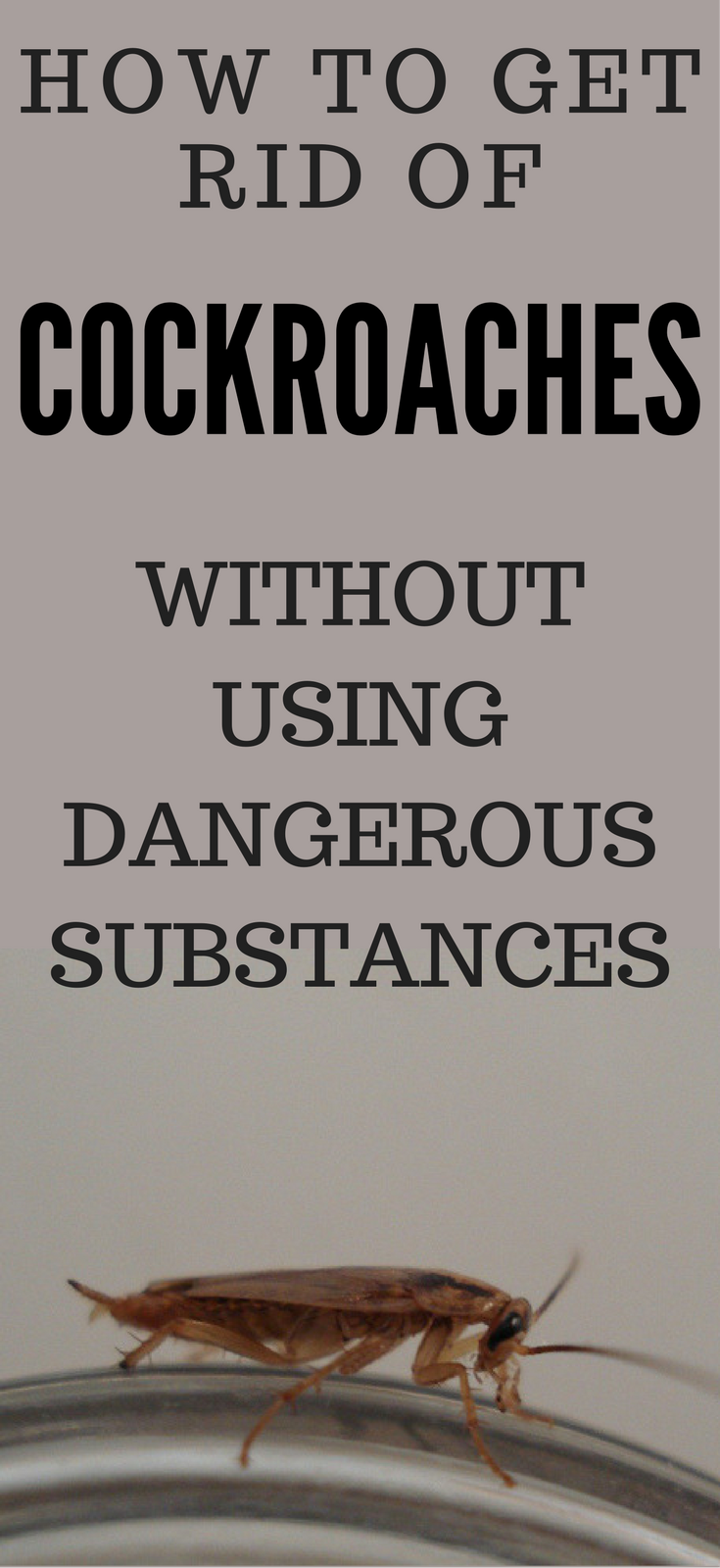 How to Get Rid of Cockroaches Without Using Dangerous Substances