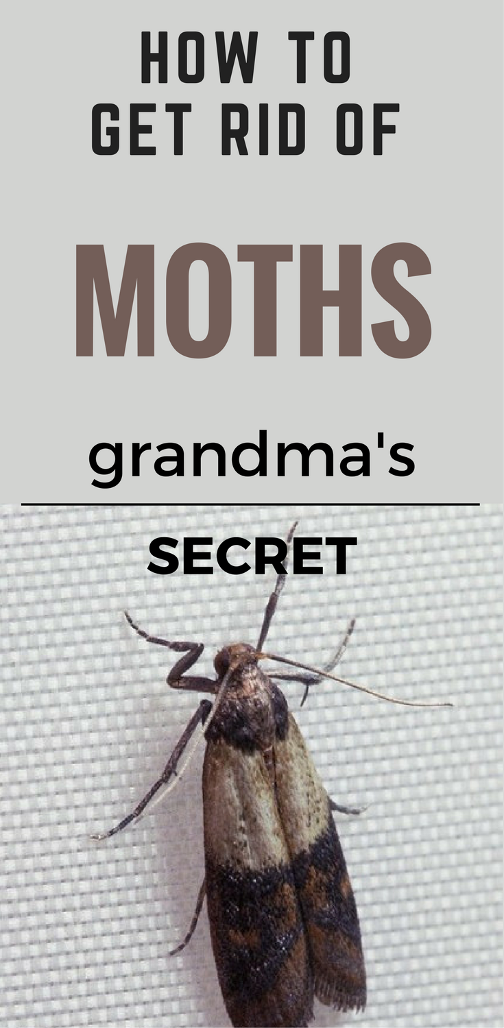 How to Get Rid of Moths - Grandma's Secret