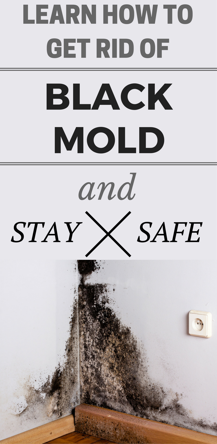 Learn How To Get Rid Of Black Mold And Stay Safe