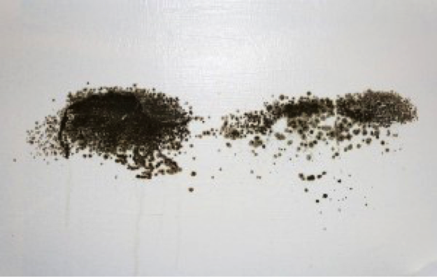 How To Get Rid Of Black Mold 5 Natural Solutions At Home