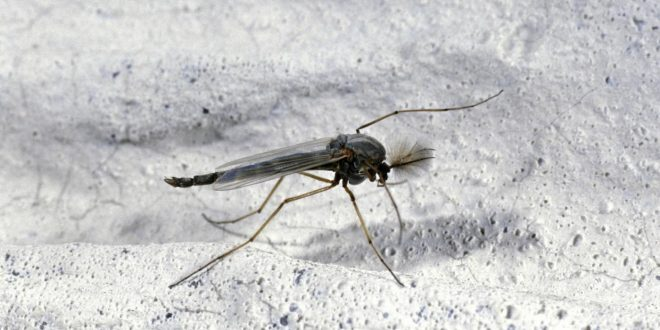How to get rid of gnats and prevent their bites for Gnat infestation in bathroom