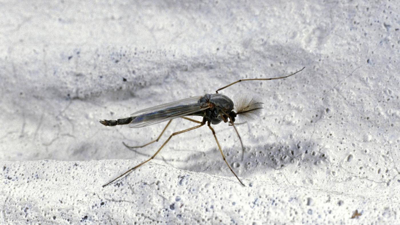 How To Get Rid Of Gnats And Prevent Their Bites