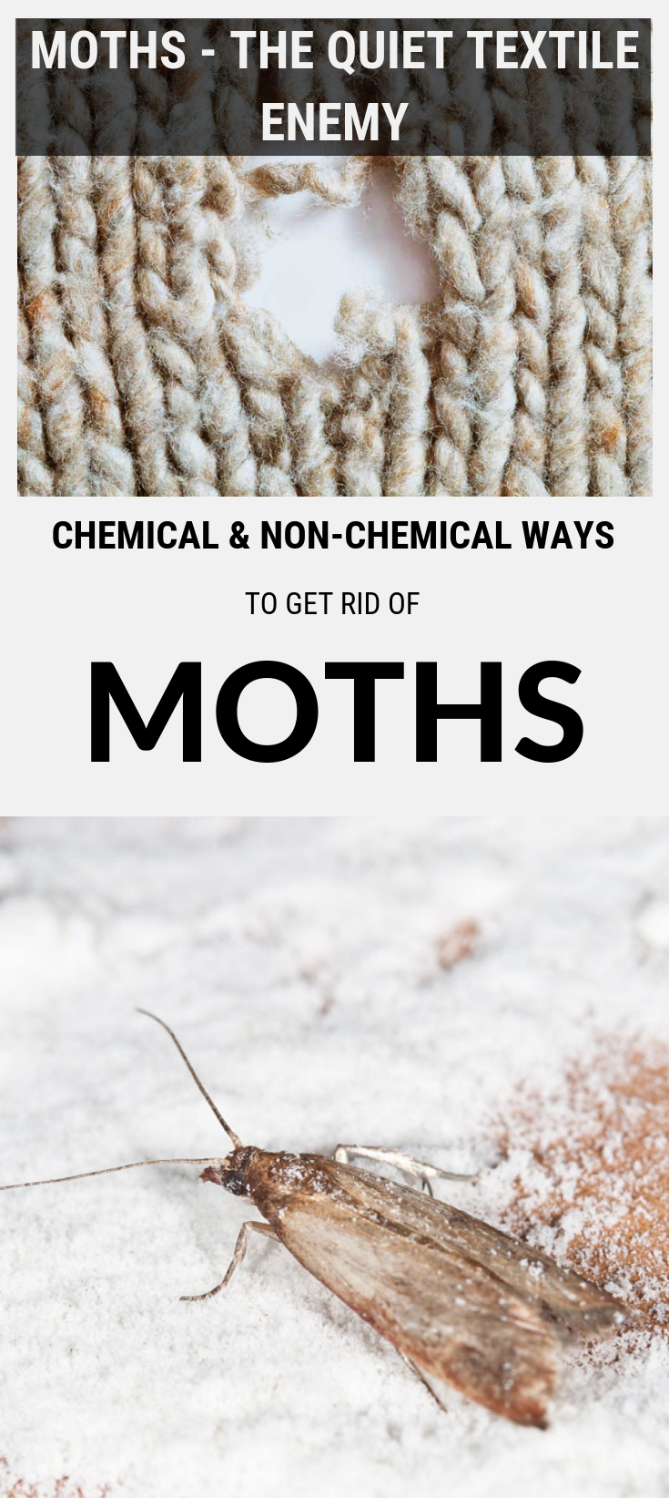 Chemical And Non Chemical Ways To Get Rid Of Moths